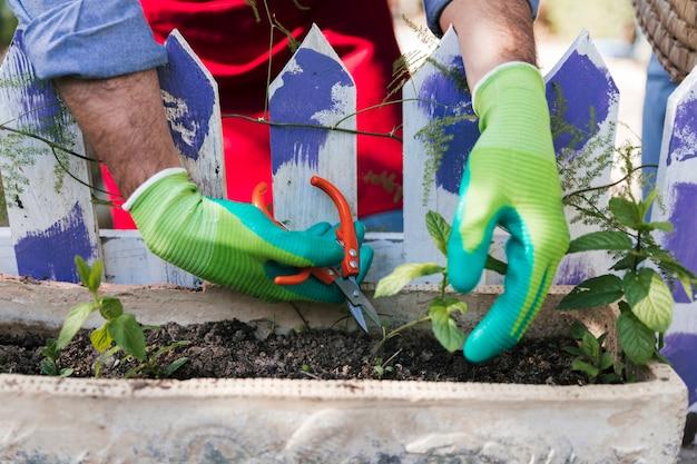 Zbliżenie męskiego ogrodnika przycinanie sadzonki z sekatory