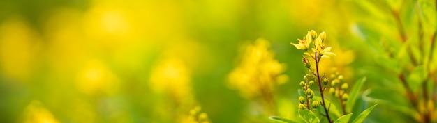 Zbliżenie mini żółty kwiat w świetle słonecznym z miejsca na kopię, używając jako tła krajobrazu roślin naturalnych