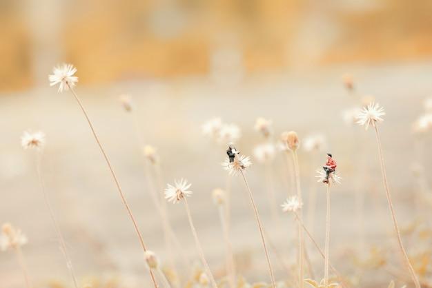 Zbliżenie miniatury, dwóch mężczyzn rozmawiających razem na kwiatek jak dmuchawiec. płytka głębia kompozycji pola i delikatny pastelowy kolor.