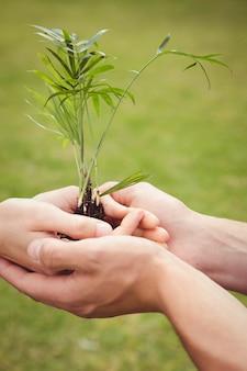 Zbliżenie: młoda para trzymając drzewko