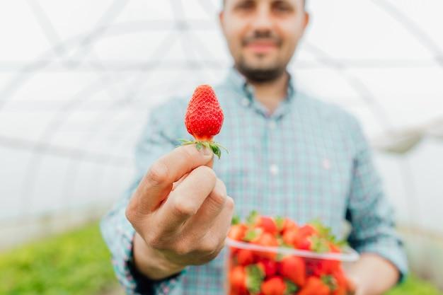 Zbliżenie młodego rolnika pokazuje dojrzałą czerwoną truskawkę w rękach z przezroczystym plastikowym pudełkiem pełnym świeżych dojrzałych truskawek truskawek w pudełku w męskich rękach selektywna ostrość