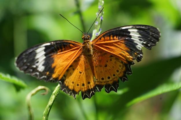 Zbliżenie motyl na kwiatku