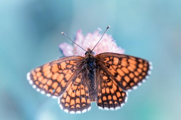 Zbliżenie motyl na niebieski kwiat mały, piękny łąka pole z dzikimi kwiatami. zbliżenie kwiaty wiosną lub latem. pojęcie opieki zdrowotnej. pole wiejskie. medycyna alternatywna. środowisko