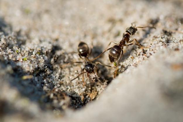 Zbliżenie mrówek chodzących po ziemi
