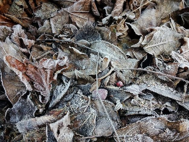 Zbliżenie mrożonych suchych liści na ziemi w okresie zimowym