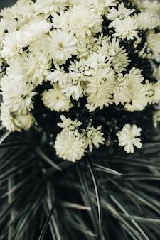 Zbliżenie na białe kwiaty
