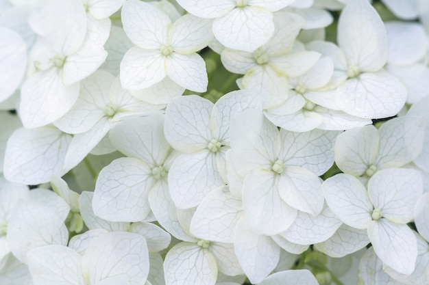 Zbliżenie na białe letnie kwiaty