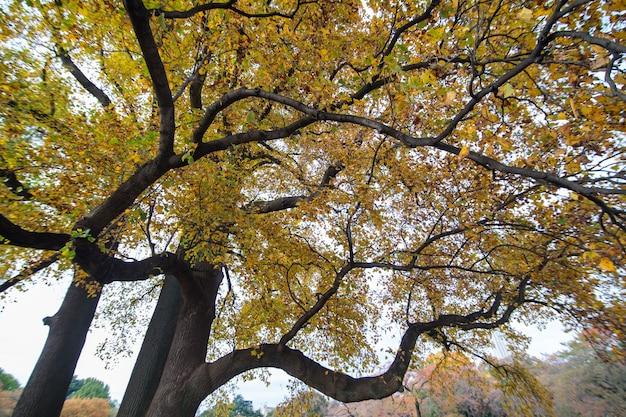 Zbliżenie na drzewo jesienią