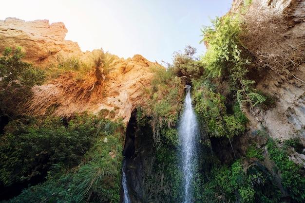 Zbliżenie na great falls shulamit spadające ze szczytu góry z zielonymi drzewami i krzewami. ein gedi - rezerwat przyrody i park narodowy, izrael. egzotyczny toutyzm, wycieczki ekologiczne, wycieczki ekstremalne