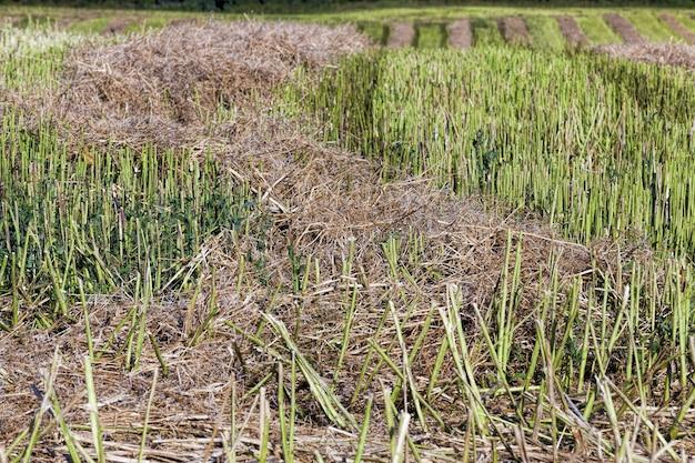 Zbliżenie na grunty rolne