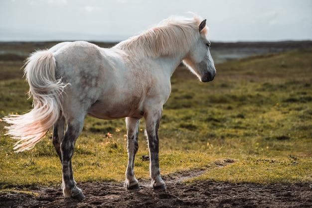 Zbliżenie na konie bawiące się w przyrodzie