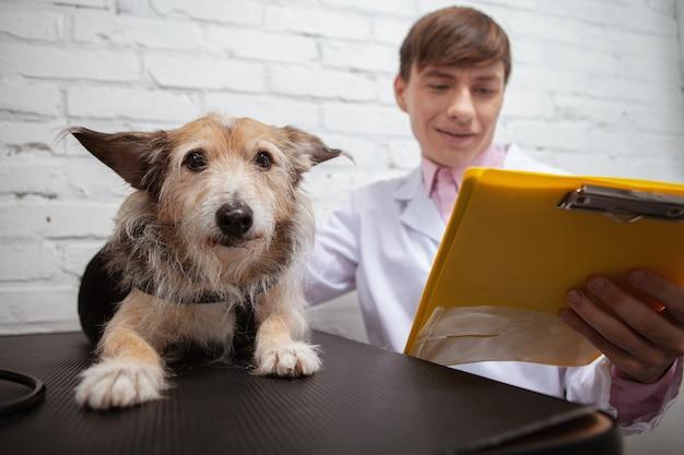 Zbliżenie na ładny pies schronisko, patrząc do kamery, leżąc na stole do badań lekarskich w klinice weterynaryjnej