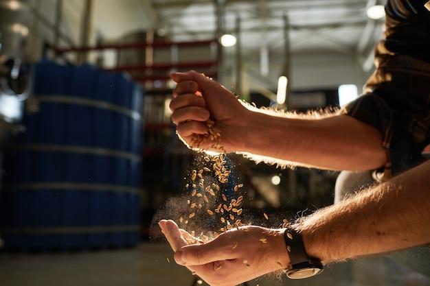 Zbliżenie na męskie dłonie wylewanie upraw pszenicy w złotym świetle słonecznym z warsztatem browarniczym w tle, kopia przestrzeń