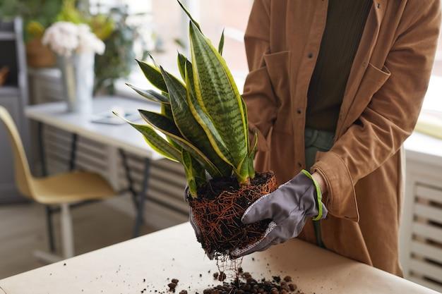 Zbliżenie na nierozpoznawalną młodą kobietę doniczkową podczas ogrodnictwa lub pracy w kwiaciarni, miejsce kopiowania