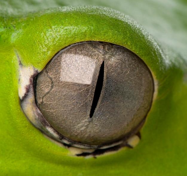 Zbliżenie na oko żaby