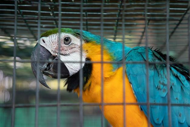 Zbliżenie na papuga ara w klatce