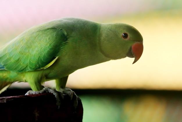 Zbliżenie na papugę