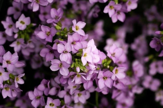 Zbliżenie na piękne kwiaty w przyrodzie
