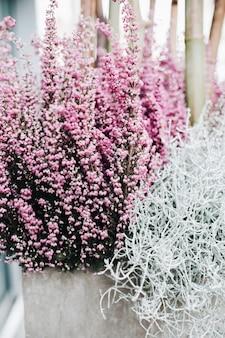 Zbliżenie na piękne różowe i białe kwiaty