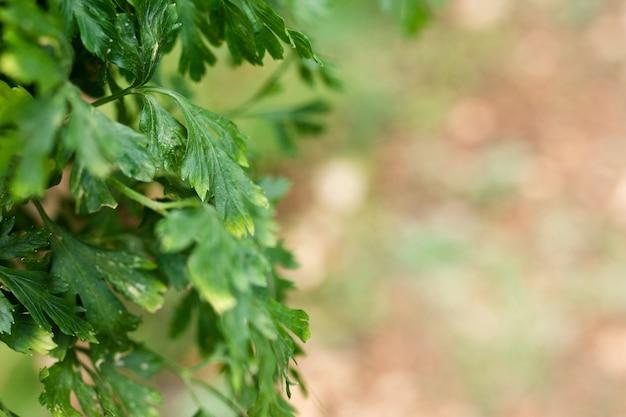 Zbliżenie na piękne warzywa zielone liście