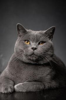 Zbliżenie na pięknego młodego pulchnego kota