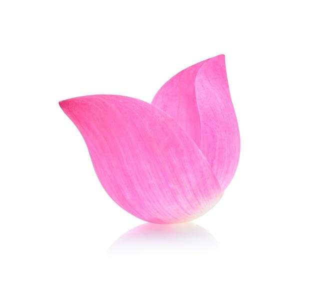 Zbliżenie na płatek lotosu izolować
