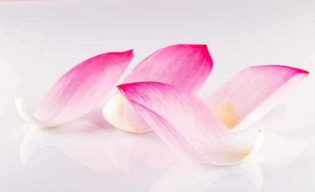 Zbliżenie na płatku lotosu, shallow dof.