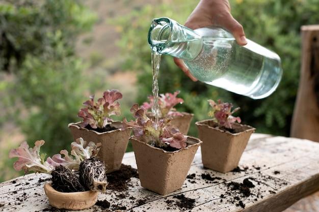 Zbliżenie na proces przesadzania roślin