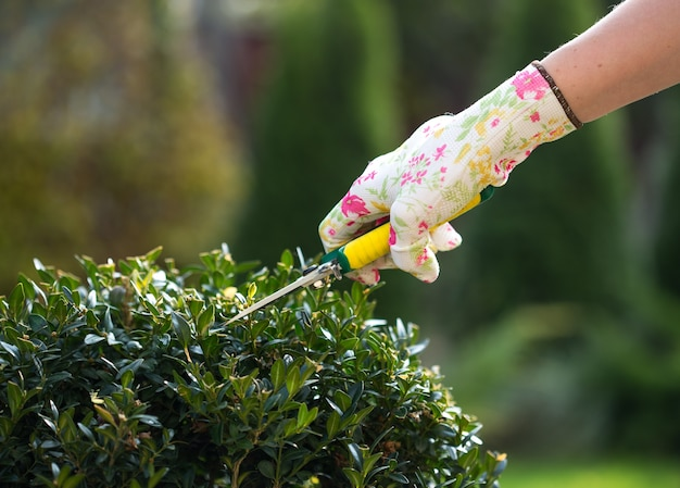 Zbliżenie na przycinanie roślin ogrodnika