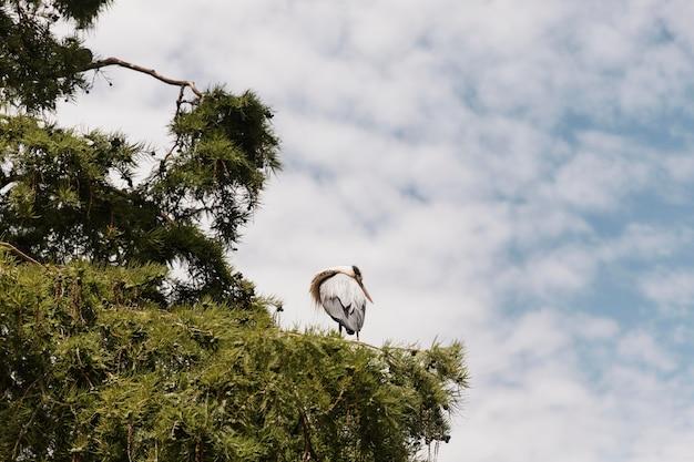 Zbliżenie na ptaka przebywającego na drzewie