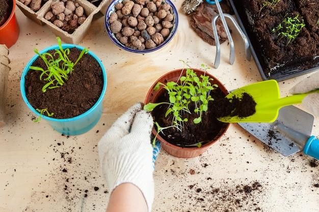 Zbliżenie na ręce przesadzające roślinę do nowej doniczki
