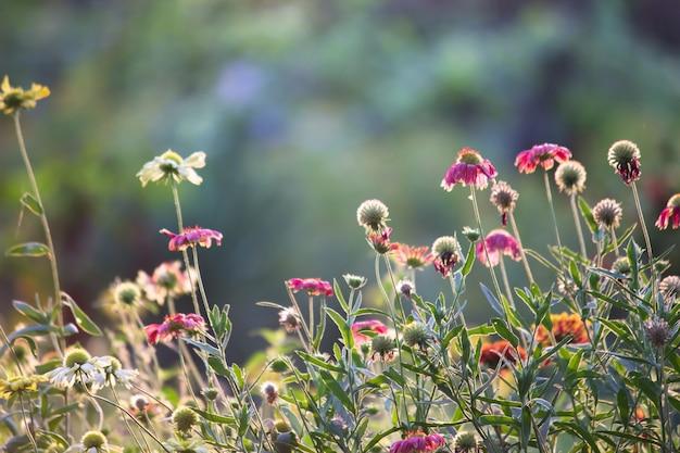 Zbliżenie na różne piękne kwiaty