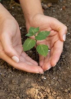Zbliżenie na sadzenie nowych roślin w przyrodzie