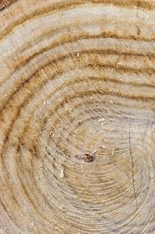 Zbliżenie na ściętym pniu drzewa przedstawiające słoje drewna