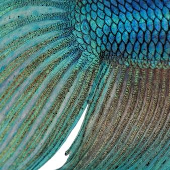 Zbliżenie na skórze ryb - betta splendens tekstura tło - niebieski bojownik syjamski