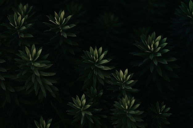 Zbliżenie na super teksturowane powtarzające się ciemnozielone rośliny z ciemnymi cieniami i czernią na relaksującej scenie z przestrzenią do kopiowania
