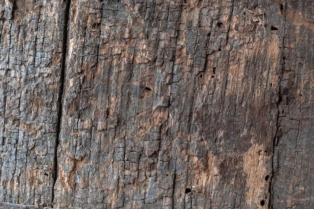 Zbliżenie na szczegóły tekstury kory drzewa