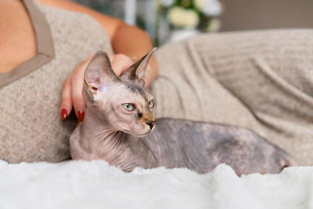 Zbliżenie na właściciela i kota w łóżku