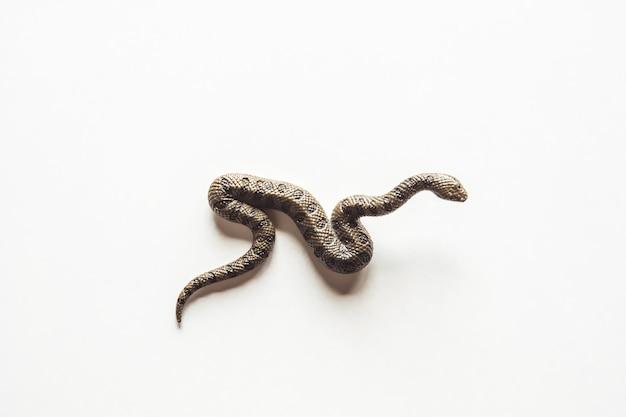 Zbliżenie na zdjęcie ogromnego i niebezpiecznego węża anakondy