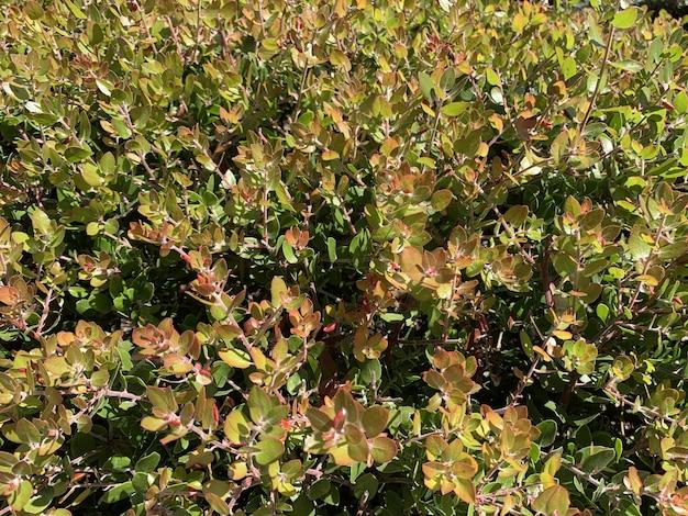 Zbliżenie na zielone i czerwone rośliny uchwycone w słoneczny dzień