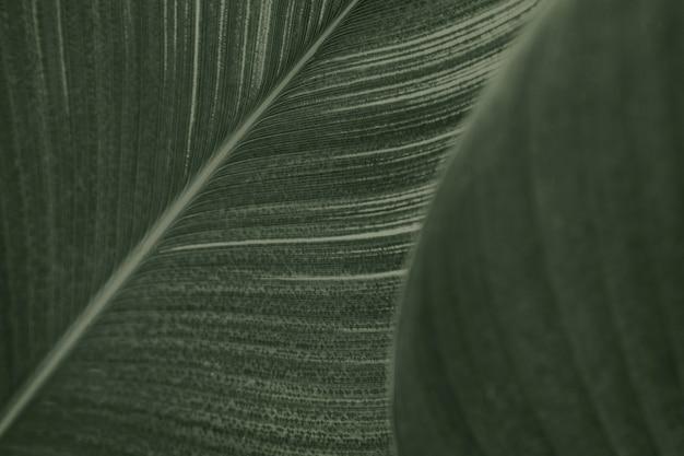Zbliżenie na zielone liście kwiatów cygar