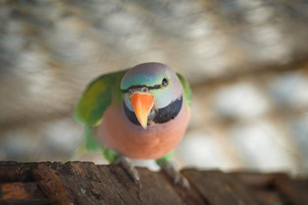Zbliżenie na zielone papugi w klatce
