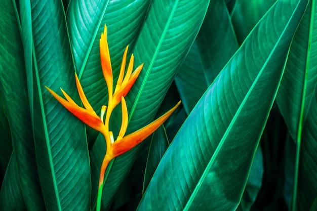 Zbliżenie natura widok tropikalnych liści i kwiatów w tle