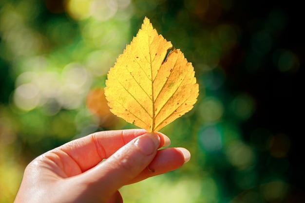 Zbliżenie naturalne jesień widok kobiety trzymające się za ręce żółty liść na ciemnym tle parku inspiracja...