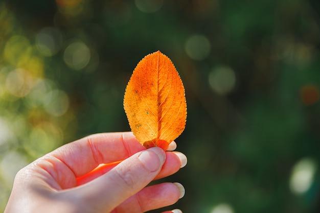 Zbliżenie naturalny jesień widok kobieta ręce trzymając czerwony pomarańczowy liść na ciemnym tle parku inspirować...