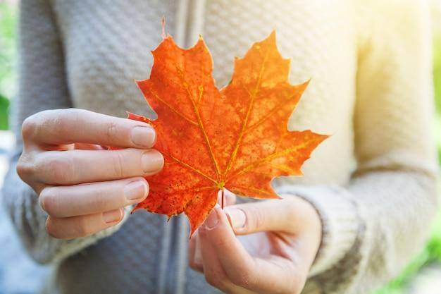 Zbliżenie naturalny jesień widok kobiety trzymające się za ręce czerwony pomarańczowy liść klonu na tle parku inspiruje...