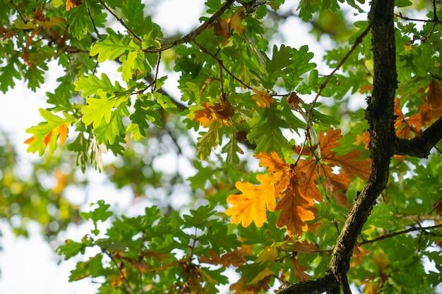 Zbliżenie naturalny widok zieleni drzewa i gałąź w jesieni