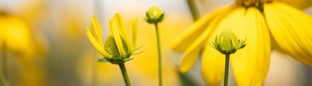 Zbliżenie natury młody żółty kwiat na niewyraźne tło gereen w świetle słonecznym z bokeh i kopia przestrzeń, używając jako tła krajobrazu roślin naturalnych, koncepcja strony tytułowej ekologii.