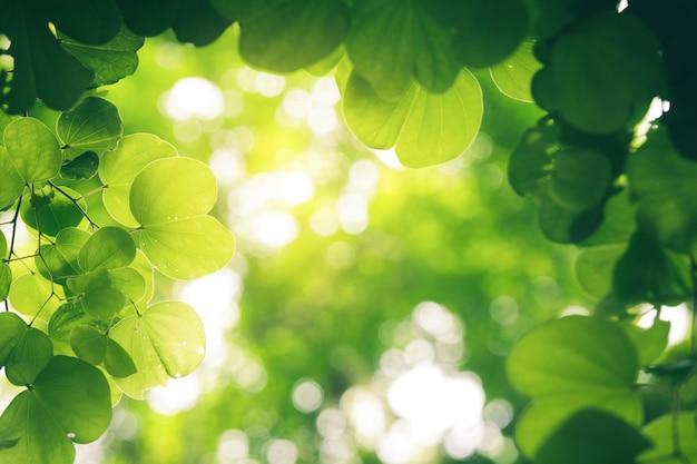 Zbliżenie natury widok zielony liść na zamazanym greenery tle.
