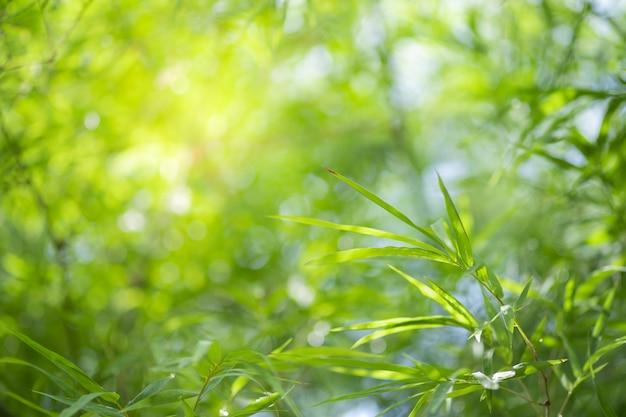 Zbliżenie natury zielony liść i światło słoneczne